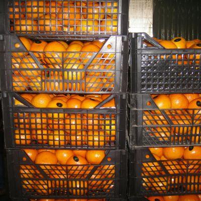 Mandarine (easy pealer)